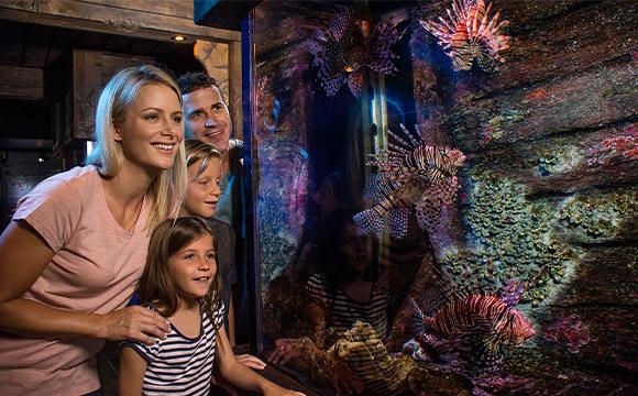 Family looking up at sea life