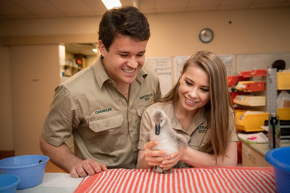 Help save injured native animals